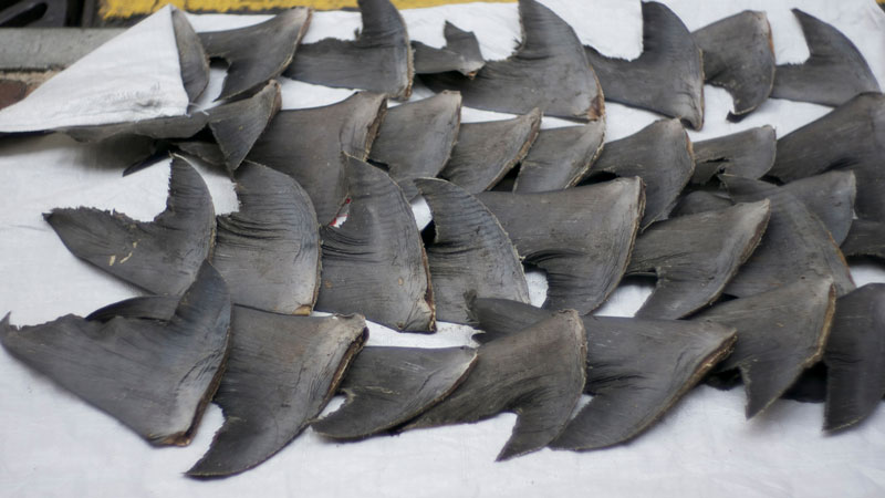 shark-finning-las-vegas