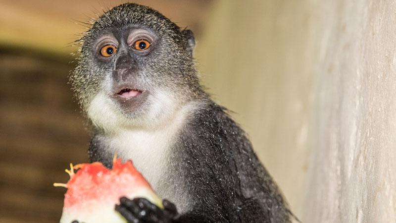 monkey-doo